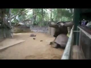 Драматический секс черепах